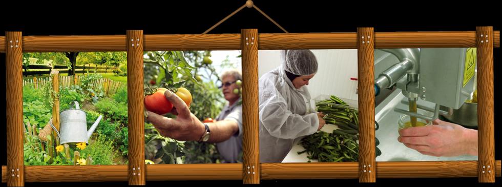 idees-de-saison-conserverie-solidaire-legumes-bio-lille-nord
